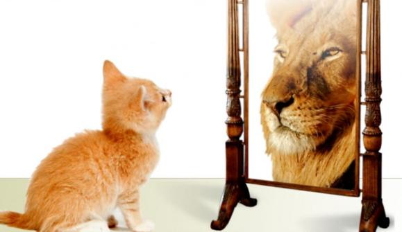 Cat_Lion2